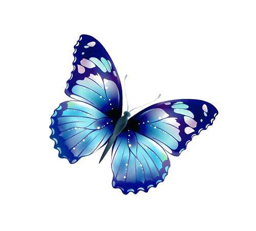 Samolepka (na auto, notebook) motýl (modrá)